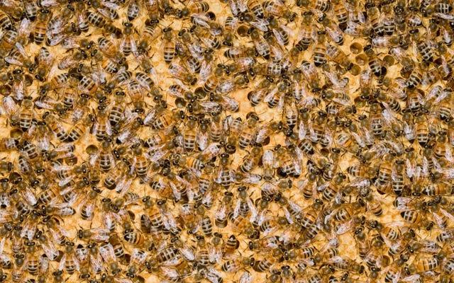 Discovery Channel fait une boucle sur le miel depuis plus de 26 heures et ne montre aucun signe d'arrêt