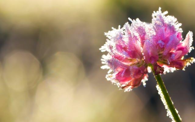 अगर लेट फ्रॉस्ट आपके पौधों को नुकसान पहुंचाता है तो क्या करें