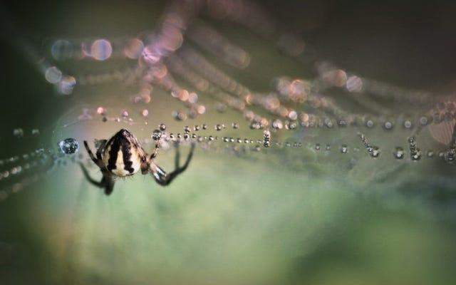 """""""Vết cắn của nhện"""" không phải lúc nào cũng từ nhện"""