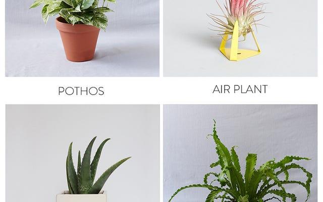 आपके बाथरूम में जीवन लाने के लिए सर्वश्रेष्ठ पौधे