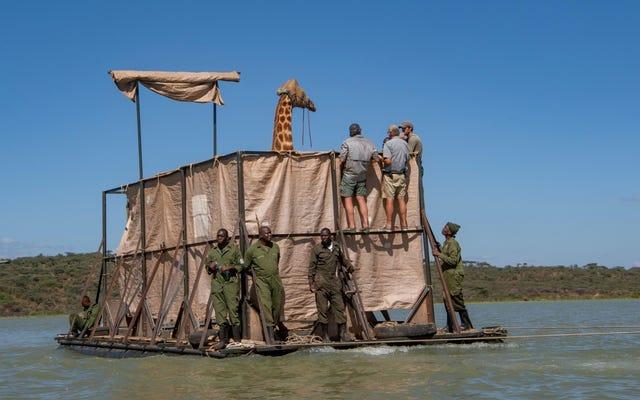 ケニアで大胆なキリンの救助が進行中