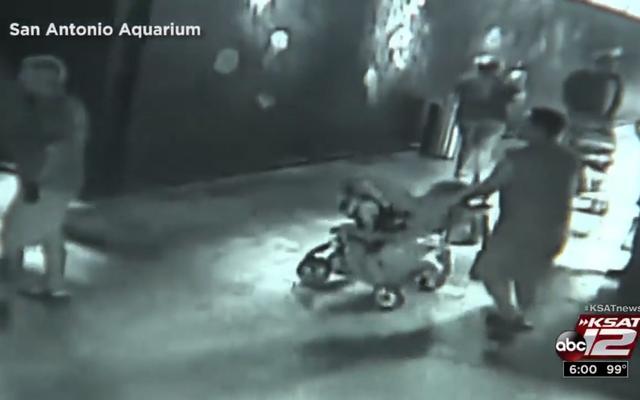 無能な泥棒が赤ちゃんに変装してサンアントニオ水族館からサメを盗む