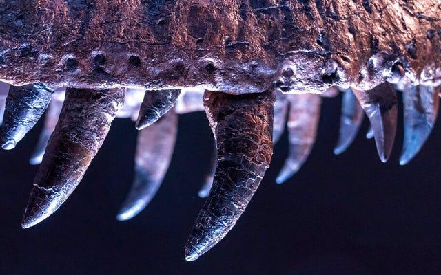 Подростки-тираннозавры не имели укусов взрослых, которые ломали кости