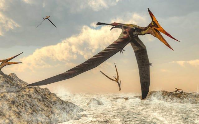 Các nhà khoa học khám phá nguồn gốc bí ẩn của loài Pterosaurs