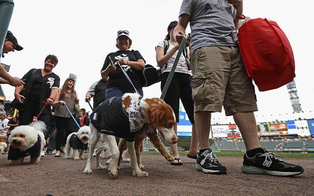 White Sox, Parklarına Bir Grup İyi Köpek Davet Etti