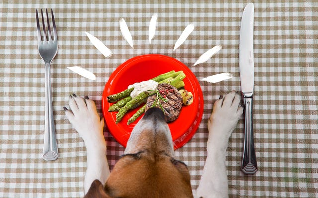 Мы любим своих собак. Стоит ли нам готовить для них?