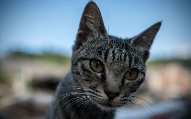ภาพยนตร์เรื่อง Cats จะย่อขนาดนักแสดงให้มีขนาดเท่าแมวและเพิ่มประสิทธิภาพในการจับขน