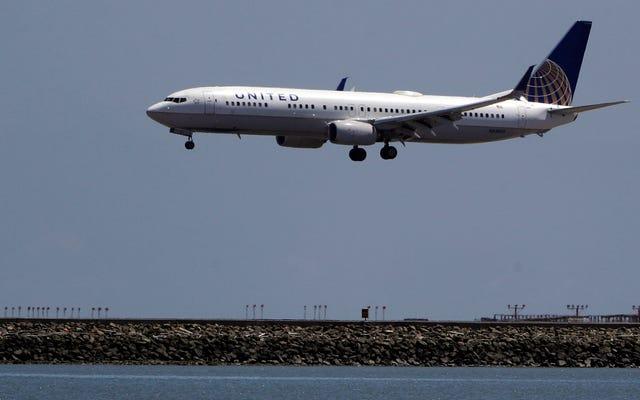 United Airlines cambia la ruta del avión después del tercer percance de la semana relacionado con un perro