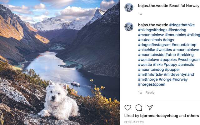 Minicik, İnanılmayacak Kadar Atletik Köpeğinin Görkemli Fotoğraflarını Çeken Bir Adamla Kısa Bir Röportaj
