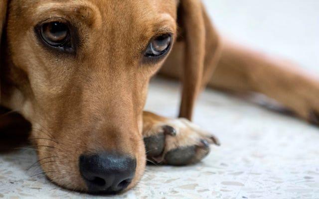 El abuso de animales, que incluye 'aplastamiento' y 'quema', es ahora un delito federal