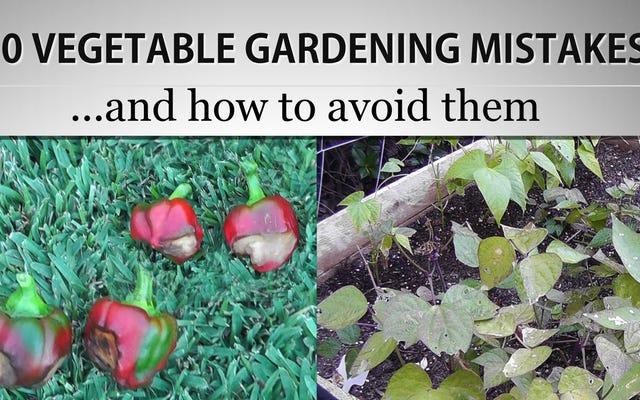 En Yaygın Sebze Bahçesi Hataları ve Bunlardan Nasıl Kaçınılır?