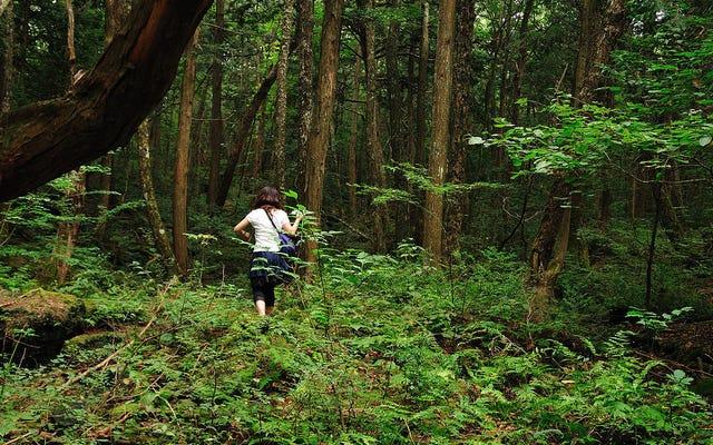 """Bir youtuber, Japon intihar ormanı Aokigahara'da bir ceset kaydediyor: """"Bunu ziyaretler yüzünden yapmadım"""""""