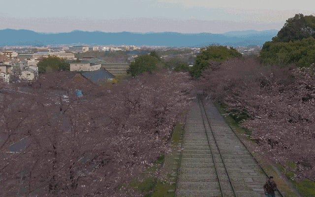 ドローンで記録されたタイムラプスで日本の桜を見る壮大な光景