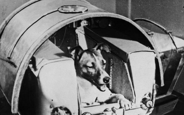 60年前に最初のドッグゴーノートになったブレイブライカです