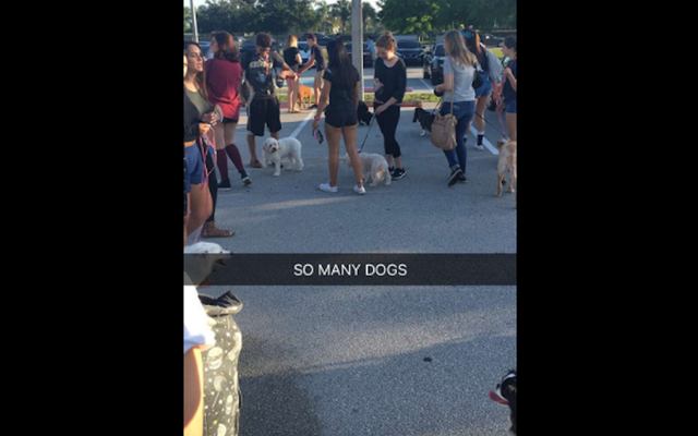 Parking dla liceum staje się parkiem dla psów w uroczym starszym dowcipie