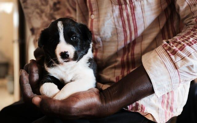 अपने कुत्ते के स्वास्थ्य के बारे में निर्णय लेने के लिए डीएनए टेस्ट का उपयोग न करें