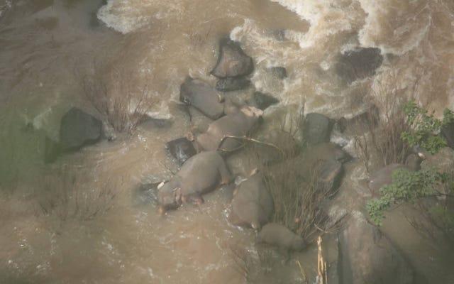 6人の象が互いに助けようとしている間に滝に落ちて死ぬ