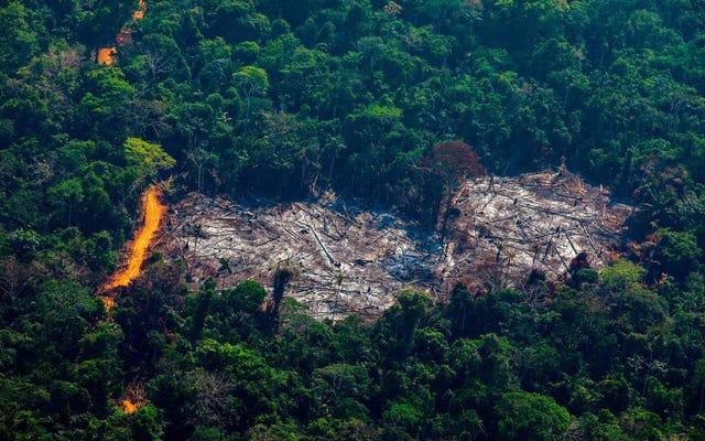Количество пожаров в тропических лесах Амазонки резко возросло в 2019 году