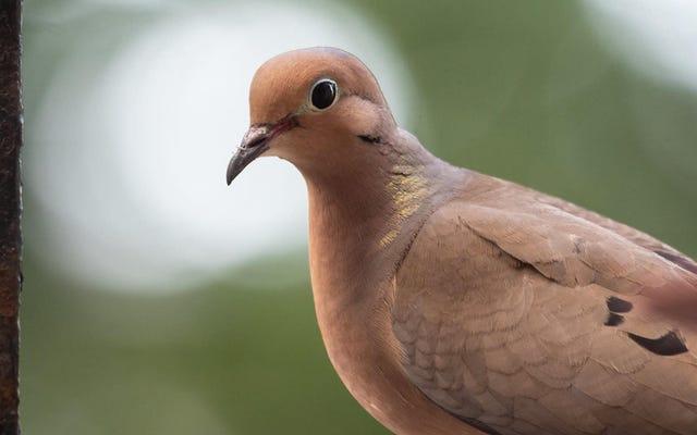 Una guida all'isolamento per il birdwatching da casa tua