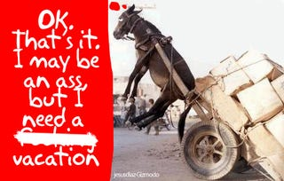 Illustration for article titled Robotic Pack Mule is More Pantomime Horse than BigDog