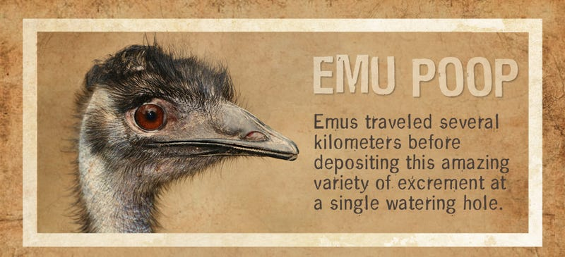 Illustration for article titled Everything You Ever Wanted to Know About Emu Poo
