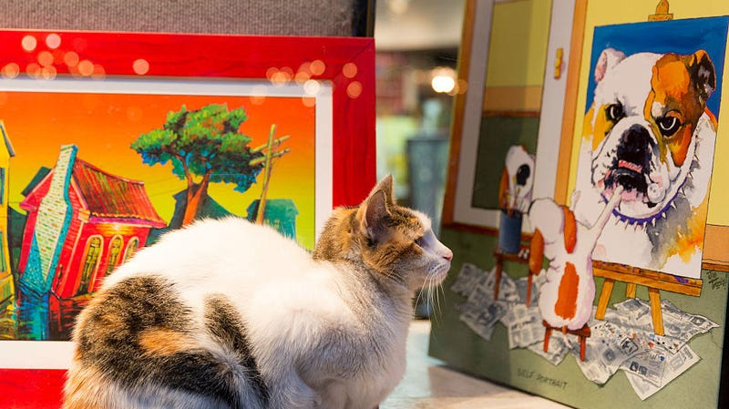 Illustration for article titled Determined, art-loving cats have been trying to sneak into a museum for years