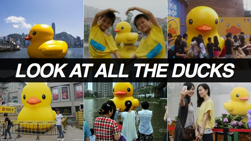 Illustration for article titled In China, There Are Too Many Giant Rubber Duck Rip-Offs