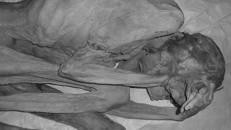 Illustration for article titled El tatuaje más antiguo del mundo tiene 5000 años, lo llevaba una momia egipcia