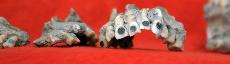 Illustration for article titled Ancient Mayan Tooth Bling Stolen - and Returned by Mystery Benefactor