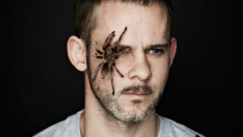 """Illustration for article titled Dominic Monaghan onworking withWild Things' """"beautiful, gentle spiders"""""""