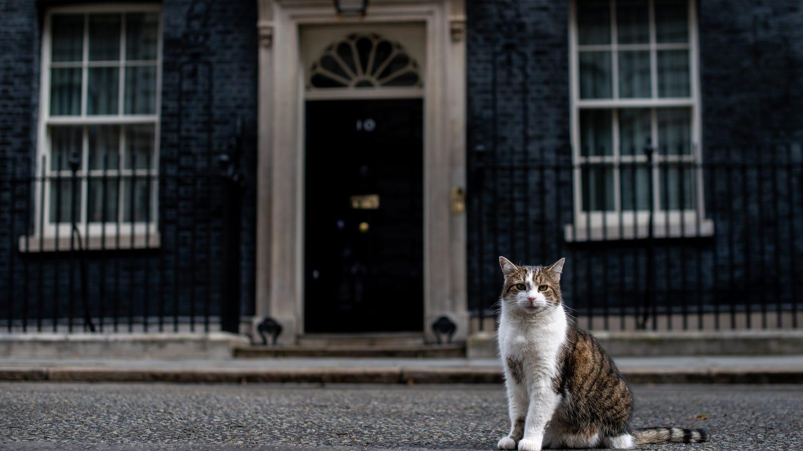Make the Cat Prime Minister