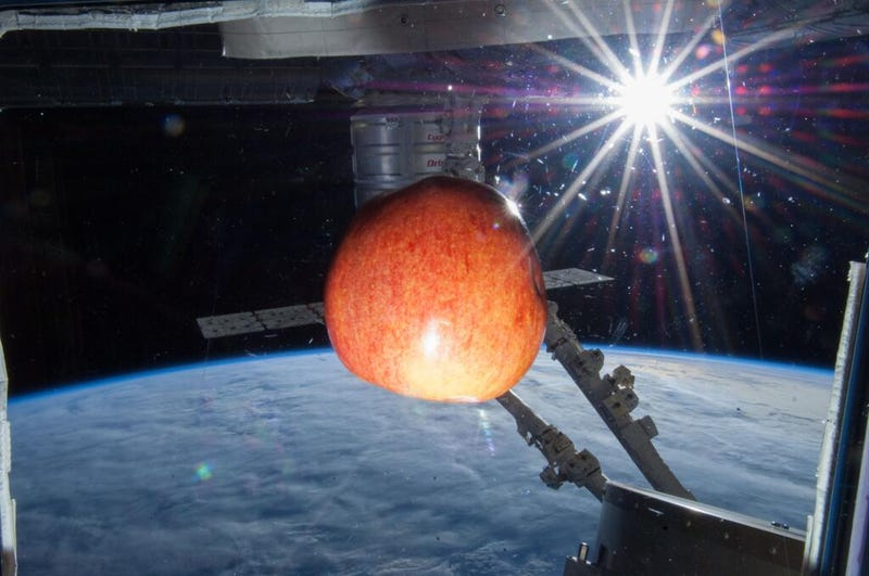 Illustration for article titled The space apple and the sinister Canadarm2