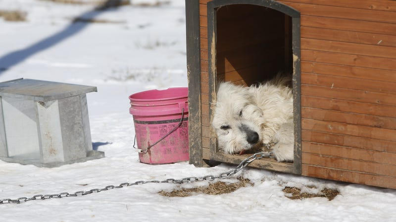 This image shows a dog rescued from a suspected puppy mill in Arkansas in 2015. Many of the dogs were found outdoors, without any protection from the freezing cold.