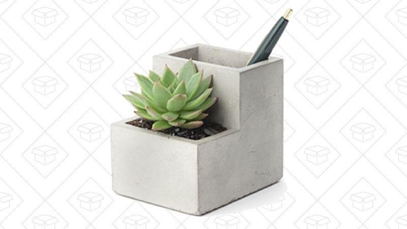 Lapicero Kikkerland con planta | $13 | AmazonGráfico: ShepMcAllister
