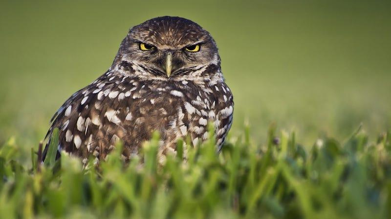 Illustration for article titled Audubon Society Slams 'Sad Ravings' of 'Consumerist' Jonathan Franzen