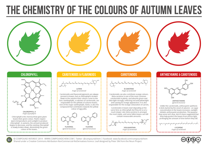 Illustration for article titled The Chemistry Behind the Different Colors of Autumn Leaves