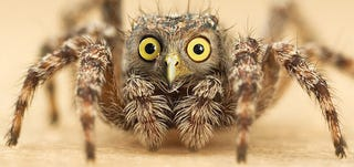 Illustration for article titled Yikes, these animal hybrids are so hilariously terrifying