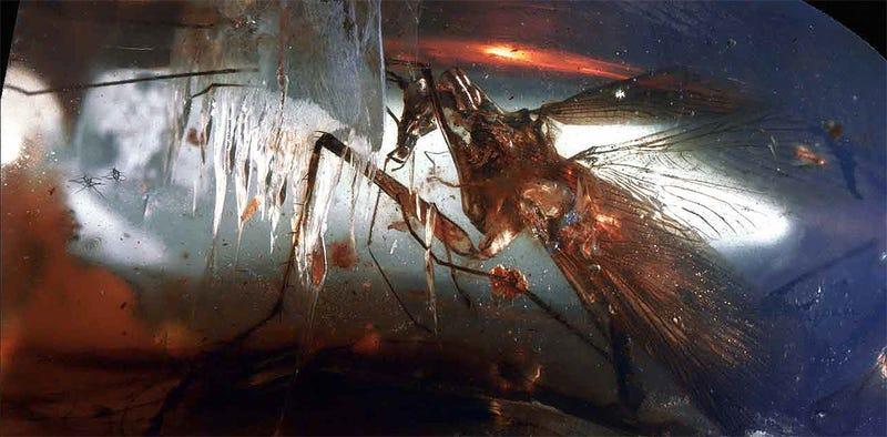 Illustration for article titled Descubren una especie extinta de cucaracha que cazaba como las mantis