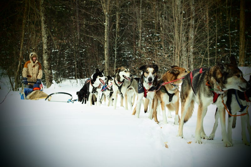 Illustration for article titled Where the Dogs Are: A Dogsledding Photo Diary
