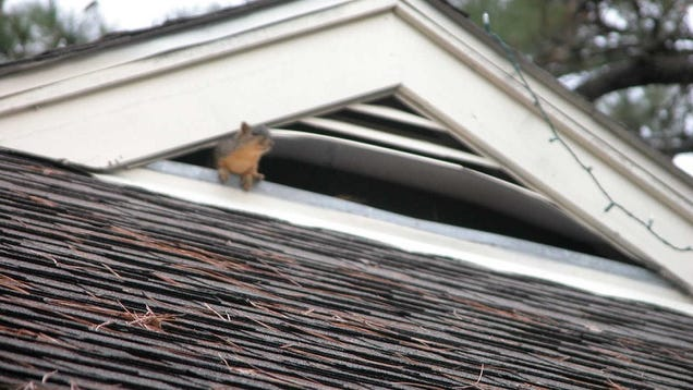 The Best Method For Evicting Pesky Squirrels From Your Attic