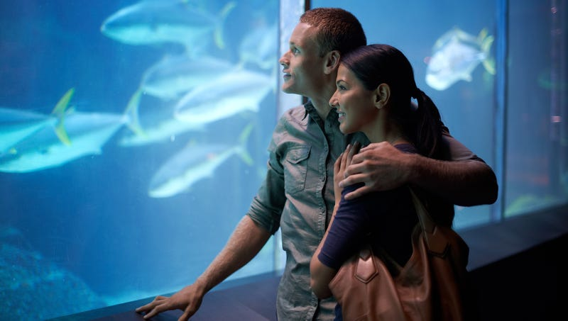 Illustration for article titled Couple On Verge Of Breaking Up Has Mind-Blowing Aquarium Visit
