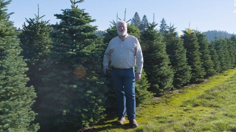 Apparently The Best Way To Harvest Christmas Trees Is By Helicopter