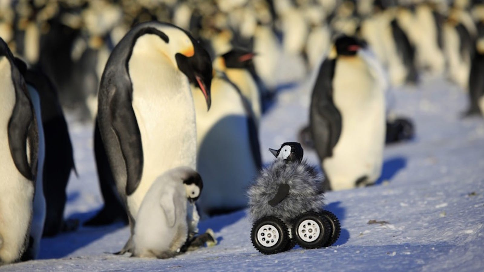 (Adorable Baby Robot Penguin) Big Brother Is Watching