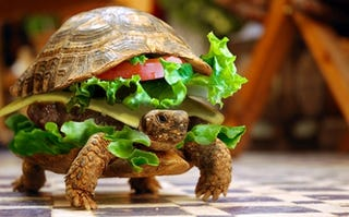 Illustration for article titled Man Tries to Sneak Turtle onto Plane Disguised as Hamburger
