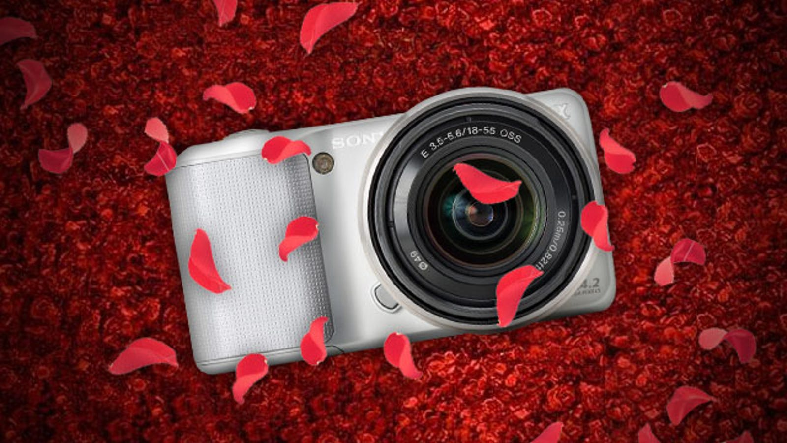How to Choose the Perfect Camera for Your Needs