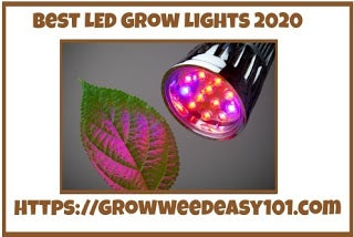 Best Led Grow Light 2020 Is Top Rated By Experts