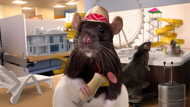 Rats Scramble To Hide Fully Functioning Amusement Park And Resort They Built As Workers Return To Office