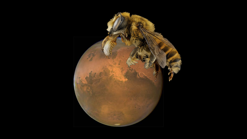 Illustration for article titled Buzz Buzz, NASA Funds Project to Put Bee Robots on Mars