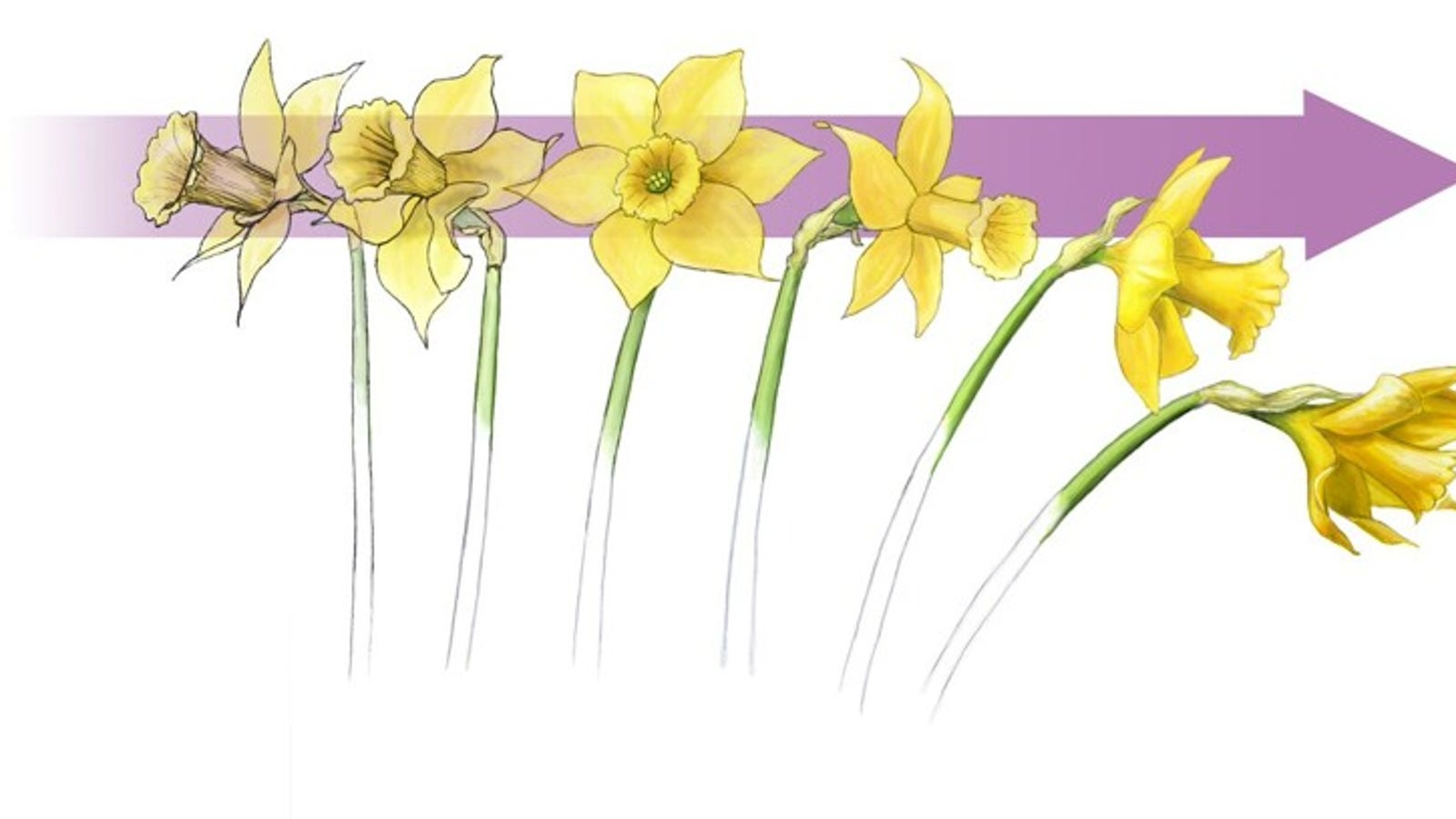 How Flowers Help Us Understand Why Bridges Collapse