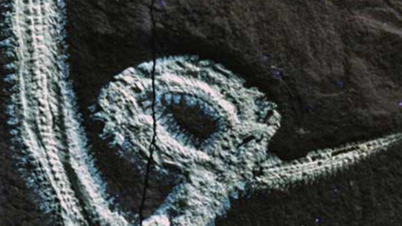 Rollinschaeta myoplena